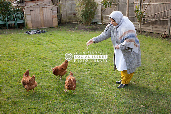 Elderly south Asian woman feeding her chickens.