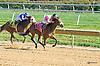 Warrior Wonder winning at Delaware Park on 10/8/15