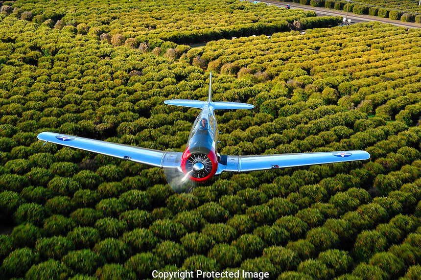 North American T-6 Texan makes a pass over Orange Groves in Mesa, Arizona