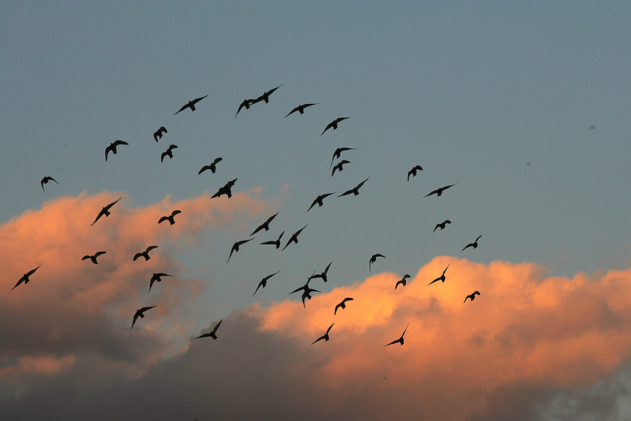 birds clouds sky sunset
