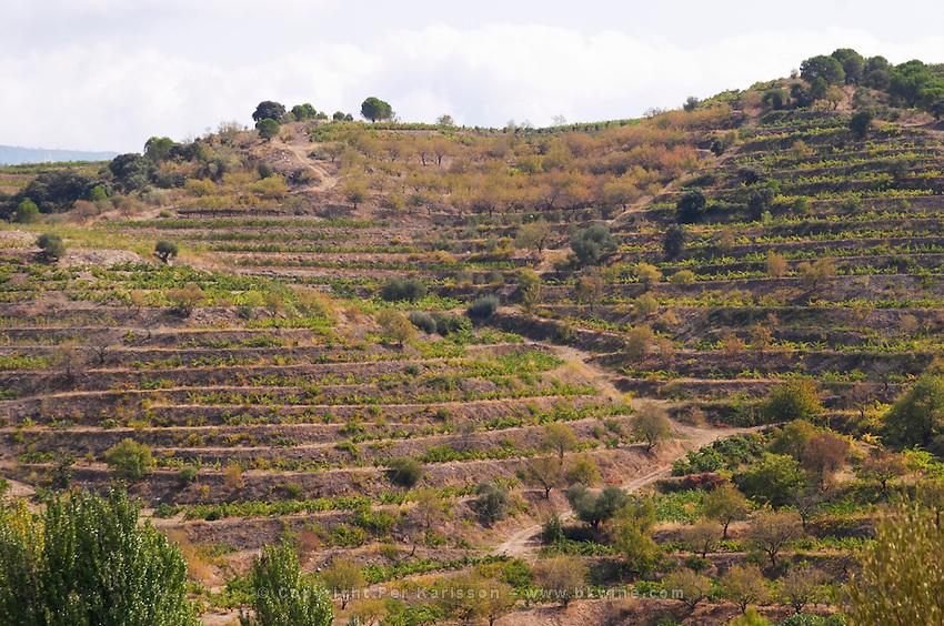 Terraced vineyard. Vineyard. Priorato, Catalonia, Spain