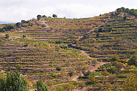 Terraced vineyard. Vineyard. Priorato, Catalonia, Spain