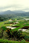 Hawaii: Kauai, Taro field, Hanalei. Photo:hiadve106.Photo copyright Lee Foster, 510/549-2202, lee@fostertravel.com, www.fostertravel.com
