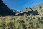 Hells Canyon NRA, Oregon/Idaho:<br /> Bunch grasses along the banks of the Snake