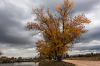 Threatening clouds add drama to the autumn scene at Sawhill Ponds, Boulder, Colorado.
