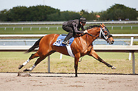 #60.Fasig-Tipton Florida Sale,Under Tack Show. Palm Meadows Florida 03-23-2012 Arron Haggart/Eclipse Sportswire.