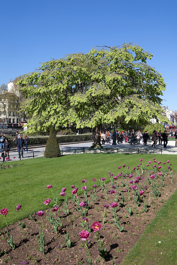 Flowers in Notre Dame Park in Spring, Paris, France