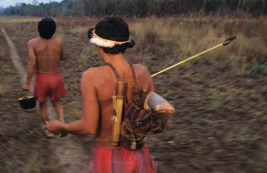 YANOMAMI TRADITIONAL LIFESTYLES , Amazon, near Boavista, northern Brazil, South America. Yanomami hunters with bows and arrows. They walk down a pathway close to an airstrip. Ecological biosphere and fragile ecosystem where flora and fauna, and native lifestyles are threatened by progress and development. The rainforest is home to many plants and animals who are endangered or facing extinction. This region is home to indigenous primitive and tribal peoples including the Yanomami and Macuxi.