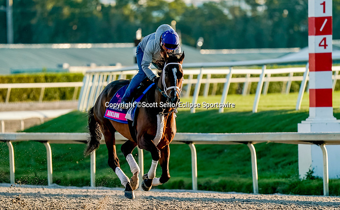 January 22, 2020: Arklow exercises as horses prepare for the Pegasus World Cup Invitational at Gulfstream Park Race Track in Hallandale Beach, Florida. Scott Serio/Eclipse Sportswire/CSM