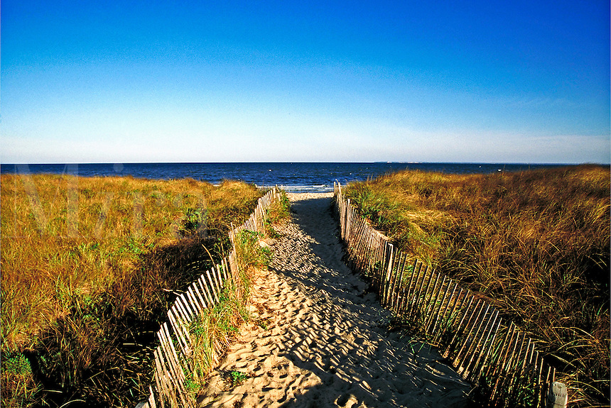 Beach path through beach grass, Brewster, Cape Cod, MA