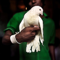A girl hold a white pigeon in the Kathputli Colony. Animals can be found in many homes in the Kathputli as they are often used in performances. This is becoming less common as it is now illegal to keep animals for this. Located in northwest Delhi, Kathputli is inhabited by approximately 2,000 performing artists, practicing traditional art forms such as marionette puppetry, juggling, magic, acrobatics, dance and music. Many have travelled all over the world showcasing their abilities, but they still choose to remain living in this slum, which is one of the most impoverished in the city.