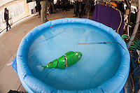 "Ph.D candidate Paul Phamduy's robotic fish, built in collaboration with other students, happy floats in a pool of water at NYU-Polytechnic School of Engineering's Research Expo in Brooklyn's ""Tech Triangle"" in New York on Friday, April 24, 2015. Over forty research projects and their creators will exhibit and explain their research including cutting-edge robotics, engineering and biotechnology. (© Richard B. Levine)"