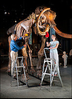 BNPS.co.uk (01202 558833)<br /> Pic: PhilYeomans/BNPS<br /> <br /> <br /> Elephant in your room??<br /> <br /> Alistair Morris and Linsay Hoadley from Summers Place give the enormous mammoth a final dusting.<br /> <br /> Interior designers fortunate enough to have a house big enough can now bid on this Woolly Mammoth skeleton being sold at Summers Place in West Sussex. <br /> <br /> Despite being over 10,000 years old and nearly 12 feet tall bidding is likely to be fierce for the ultimate 'Statement peice' although with a &pound;250,000 estimate potential owners will need very deep pockets to secure this unique item.<br /> <br /> The skeleton of the most famous animal of the Ice Age, which died out about 10,000 years ago, is 11ft 6in tall and 18ft long. It also sports enormous 8 foot tusks.<br /> <br /> Auctioneer James Rylands from Summers Place Auctions said it is very unusual to find a complete skeleton and one has not been sold in the UK before.<br /> <br /> The skeleton will be part of an evolution sale at Summers Place Auctions on November 26.