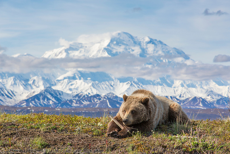 denali national park bbw personals Explore the spectacular denali national park, alaska's first national park that spans across six million acres of wilderness.