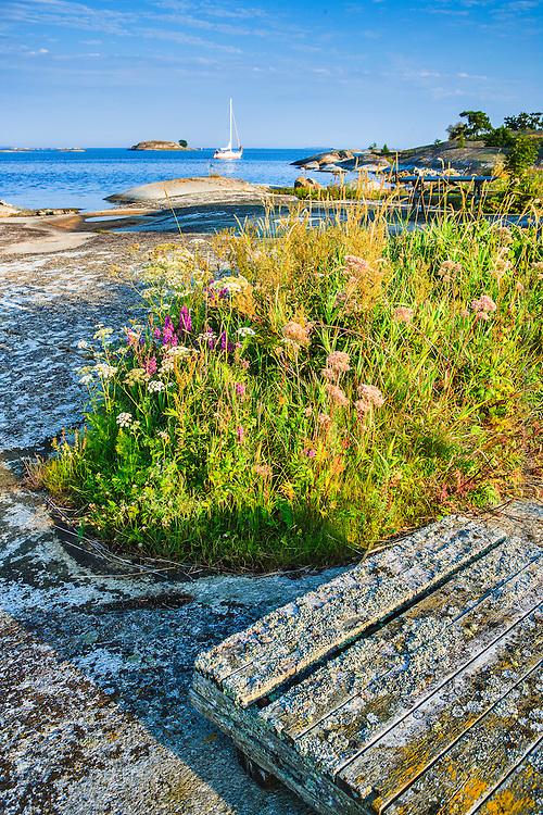 Blommor på Kallskär i Stockholms ytterskärgård.