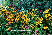 63821-08511 Gloriosa Daisy, Red Bee Balm &  Purple Coneflower  Marion Co.  IL