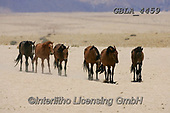 Bob, ANIMALS, REALISTISCHE TIERE, ANIMALES REALISTICOS, horses, photos+++++,GBLA4459,#a#, EVERYDAY