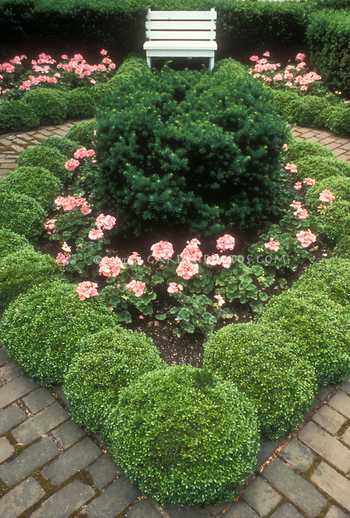 Boxwood garden in tiny setting with bench plant flower for Garden hedge designs