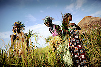 Women from Amdalei village near Lunsar, Sierra Leone working in their rice fields. The pregnant women will work until they feel the first labour pains.