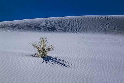 Lines appear at the sand dunes of White Sands National Monument, New Mexico