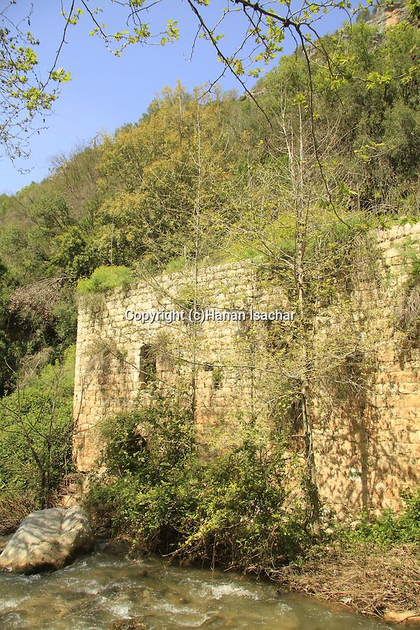 Israel, Upper Galilee, Ein Ziv in Nahal Kziv