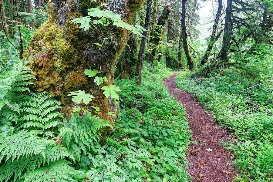 Old Sauk River Trail, Cascade Mountains, Washington, USA