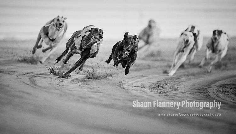 Pix: Shaun Flannery/shaunflanneryphotography.com<br /> <br /> COPYRIGHT PICTURE&gt;&gt;SHAUN FLANNERY&gt;01302-570814&gt;&gt;07778315553&gt;&gt;<br /> <br /> July 1990<br /> Greyhound Racing<br /> Askern Greyhound Stadium
