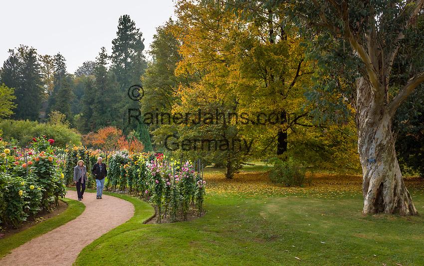 Italy, Piedmont, Verbania: Villa Taranto - Botanical Garden - dahlia garden   Italien, Piemont, Verbania: Botanischer Garten der Villa Taranto - im Dahliengarten