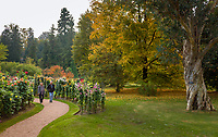 Italy, Piedmont, Verbania: Villa Taranto - Botanical Garden - dahlia garden | Italien, Piemont, Verbania: Botanischer Garten der Villa Taranto - im Dahliengarten