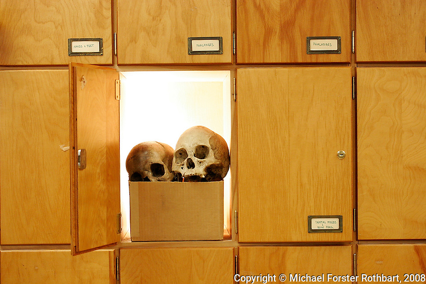 Got a skeleton in your closet? John Hawks does. His physical anthropology lab in the University of Wisconsin Social Sciences building contains cupboards full of skulls and bones. These skeletal remains and reproductions used for teaching range in age from decades to millennia old. Hawks, an associate professor of anthropology, has published new genome research revealing that the rate of human evolution has increased over the last 10,000 years.<br /> <br /> Client: Science Illustrated<br /> &copy; Michael Forster Rothbart<br /> www.mfrphoto.com <br /> 607-267-4893 o 607-432-5984<br /> 5 Draper St, Oneonta, NY 13820<br /> 86 Three Mile Pond Rd, Vassalboro, ME 04989<br /> info@mfrphoto.com<br /> Photo by: Michael Forster Rothbart<br /> Date: 2/2008    File#:  Canon 20D digital camera frame 1828<br /> ---------<br /> Original caption:<br /> A physical anthropology lab in the Social Sciences building at UW-Madison contains cupboards full of skulls and bones. These skeletal remains and reproductions used for teaching range in age from decades to millennia old. Assistant professor of anthropology John Hawks has published new genome research revealing that the rate of human evolution has increased over the last 10,000 years.