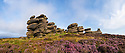 A millstone grit formation known as the 'Coach and Horses' on Derwent Edge, with Common Heather / Ling {Calluna vulgaris} in bloom. Peak District National Park, Derbyshire, UK. September. Stitched Panorama.