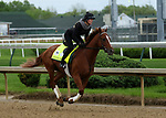 April 26, 2019 : Country House works out at Churchill Downs, Louisville, Kentucky, preparing for a start in the Kentucky Derby. Owner Mrs. J. V. Shields Jr., E. J. M. McFadden Jr., and LNJ Foxwoods, trainer William I. Mott. By Lookin at Lucky x Quake Lake (War Chant) Mary M. Meek/ESW/CSM