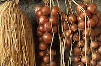 Europe/France/Bretagne/29/Finistère/Mespaul : Oignons roses de Roscoff