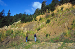 People hiking, surrounded by pompas grass, Mendocino California