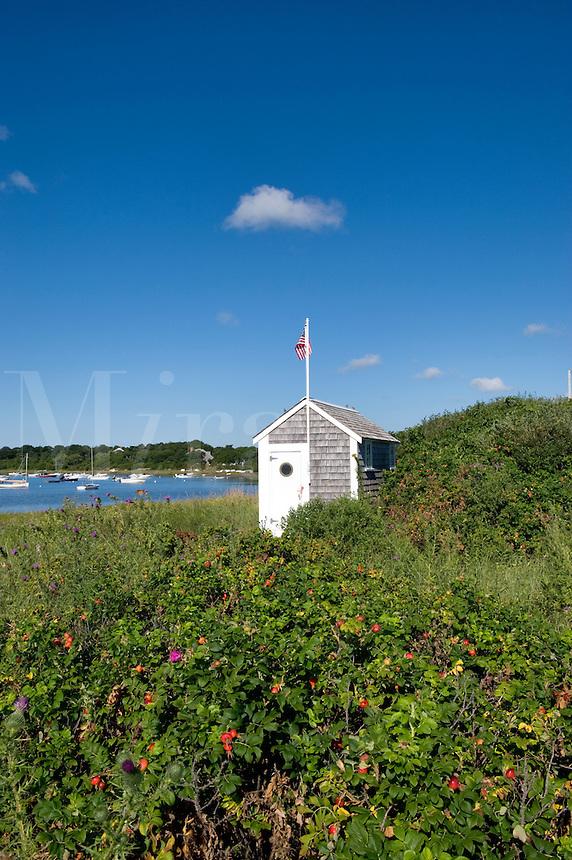 Beach shack and rosehips along Chatham harbor, Cape Cod, Massachusetts, USA