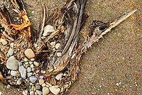 January 16, 2003; Nanticoke, Ontario, Canada; The stone covered carcass of a bird on a Lake Erie beach near Ontario Power Generation's Nanticoke thermal power-plant. Photo © Ron Scheffler.