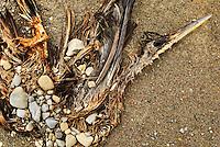 January 16, 2003; Nanticoke, Ontario, Canada; The stone covered carcass of a bird on a Lake Erie beach near Ontario Power Generation's Nanticoke thermal power-plant. Photo © Ron Scheffler.