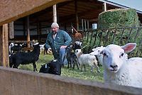 Tom Makowecki on his sheep farm, located on the outskirts of Edmonton, on March 16, 2001.  John Ulan/Epic Photography Inc.