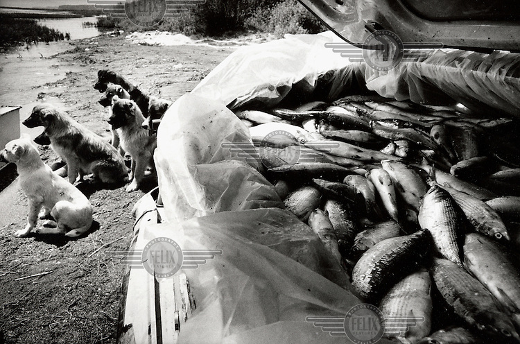 The trunk of an old Volga car is loaded with the catch from a day's fishing on Lake Sevan.