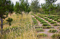 Urban park landscape design meadow garden, Jeffrey Open Space, Irvine California