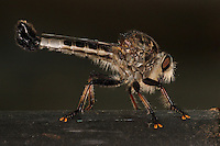 """Obi-Wan never told you what happened to your father"" I ate em'! ;-)<br />