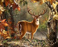 Lodge and Nature