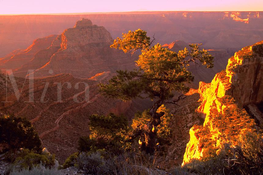 Sunrise on the North Rim of the Grand Canyon Kaibab National Forest . Arizona, Kaibab National Forest Grand Canyon National Park North Rim.