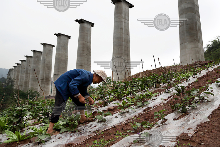 71 year old Zhou Jiezhong ekes out a living as a new urbanite by growing vegetables under a new bridge on land that has been claimed by the government to build relocation housing project in the southwestern Chinese megapolis of Chongqing. He and his neigbours were all moved from their farmland and resettled nearby in a purpose-built estate. Some bemoan the poor relocation compensation but others are happy to enjoy a social life away from the burden of farming. The Chinese government plans to move 250 million rural residents into urban areas over the coming dozen years though it is unclear whether people want to move and where the money for this project will come from. Further urbanisation is meant to drive up consumption to counterbalance an export orientated economy and end subsistence farming but the drive to get people off the land is causing tens of thousands of protests each year. /Felix Features