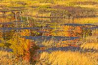 Autumn surrounding wetland<br />Dorset<br />Ontario<br />Canada