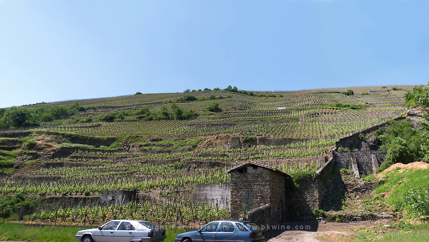 vineyard condrieu rhone france