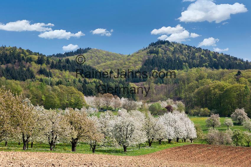 Germany, Baden-Wuerttemberg, Markgraefler Land, landscape near Obereggenen   Deutschland, Baden-Wuerttemberg, Markgraeflerland, Landschaft bei Obereggenen