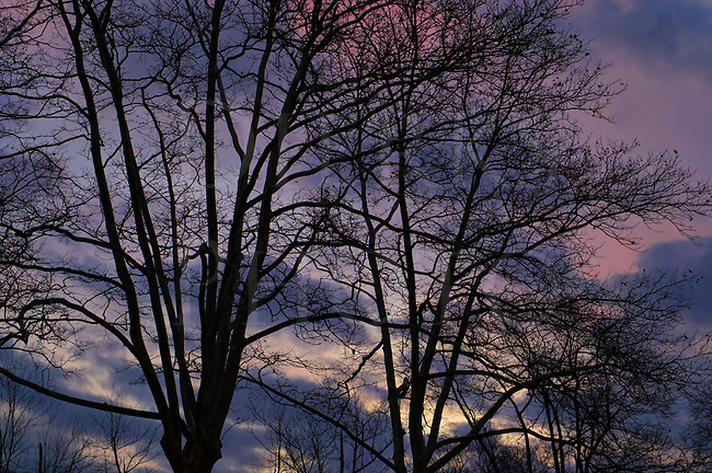 Bare tree limbs silhouetted against colorful dawn sky, dramatic clouds of purple and yellow in an early morning sunrise.