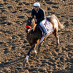 October 31, 2019: Breeders' Cup Filly & Mare Sprint entrant Lady Ninja, trained by Richard Baltas, exercises in preparation for the Breeders' Cup World Championships at Santa Anita Park in Arcadia, California on October 31, 2019. John Voorhees/Eclipse Sportswire/Breeders' Cup/CSM