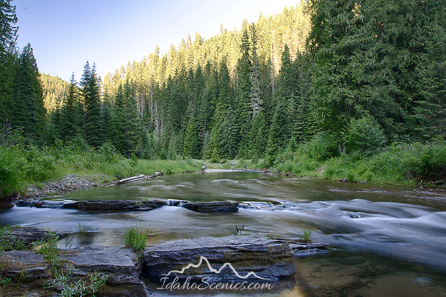 Idaho, North, Kootenai County, Coeur d 'Alene National Forest. Shoshone Creek, a tributary of the Coeur d'Alene River, in evening light of summer.I